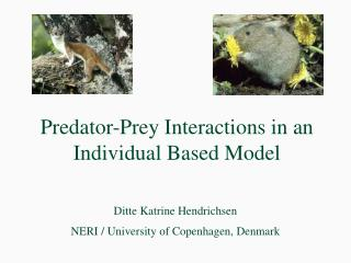 Predator-Prey Interactions in an Individual Based Model
