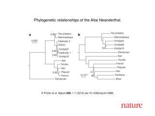 K Prüfer  et al. Nature  000 , 1-7 (2013) doi:10.1038/nature12886