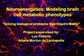 Neuroenergetics: Modeling brain cell metabolic phenotypes