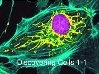 Discovering Cells 1-1