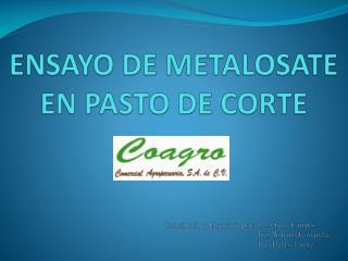 ENSAYO DE METALOSATE  EN PASTO DE CORTE