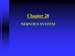 Chapter 28NERVOUS SYSTEM