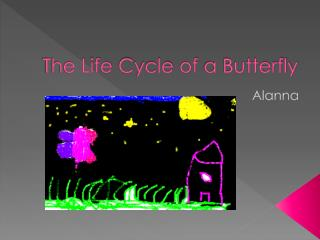 The  Life  C ycle  of  a  Butterfly
