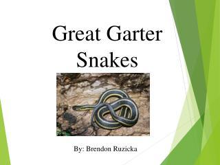 Great Garter Snakes