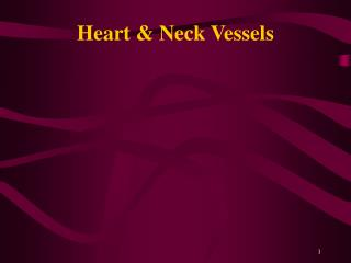 Heart  Neck Vessels