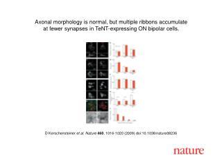 D Kerschensteiner  et al. Nature 460 ,  1016 - 1020  (2009) doi:10.1038/nature08 236