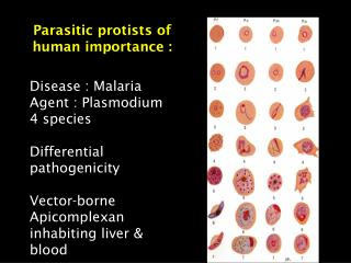 Parasitic protists of human importance :
