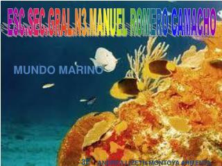 ESC.SEC.GRAL.N3.MANUEL ROMERO CAMACHO