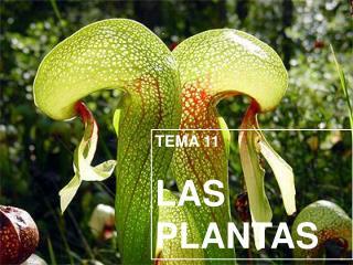 TEMA 11 LAS PLANTAS