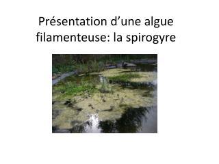Présentation d'une algue filamenteuse: la spirogyre