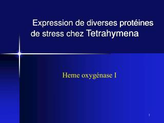 Expression de diverses protéines de stress chez  Tetrahymena