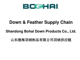 Down & Feather Supply Chain Shandong Bohai Down Products Co., Ltd. 山东渤海羽绒制品有限公司 羽绒供应链