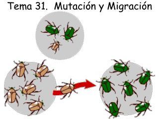 Tema 31.  Mutación y Migración