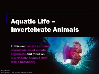 Aquatic Life – Invertebrate Animals