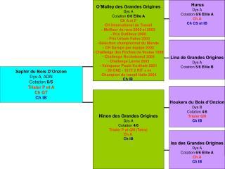 Saphir du Bois D�Onzion Dys A, ADN Cotation  6/6 Trialer P et A Ch GT Ch IB