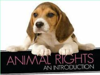 Animal Welfare  Animal Rights
