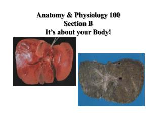 Anatomy & Physiology 100 Section B It's about your Body!
