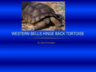 Western Bells Hinge Back Tortoise