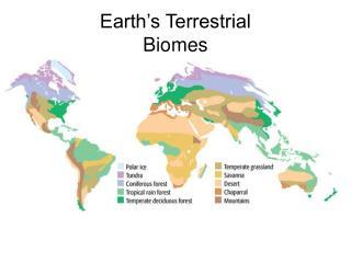 Earth's Terrestrial Biomes