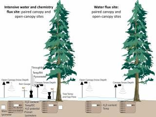 Intensive water and chemistry  flux site : paired canopy and  open-canopy sites