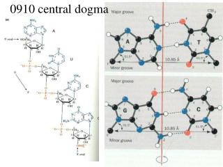 0910 central dogma