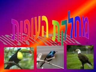 מחלקת העופות