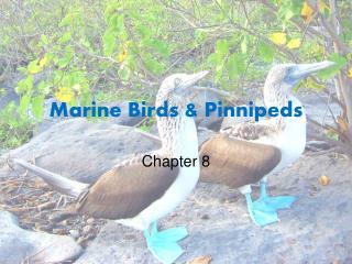 Marine Birds & Pinnipeds