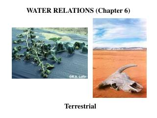 WATER RELATIONS (Chapter 6)