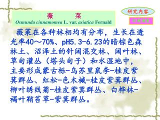 薇       菜 Osmunda cinnamomea  L. var.  asiatica  Fernald