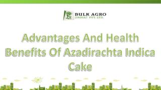 Azadirachta Indica Cake A Natural Fertilizer