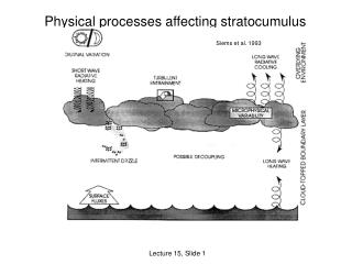 Physical processes affecting stratocumulus