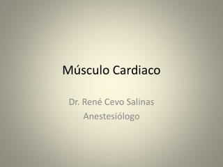 M�sculo Cardiaco