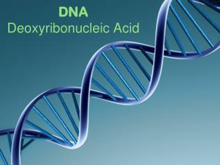 DNA D eoxyribonucleic  A cid