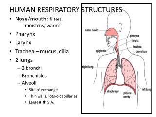 HUMAN RESPIRATORY STRUCTURES