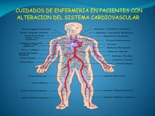 CUIDADOS DE ENFERMERIA EN PACIENTES CON ALTERACION DEL SISTEMA CARDIOVASCULAR
