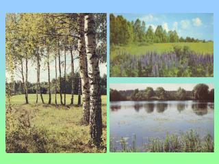 Растения луга и леса Венерин башмачок