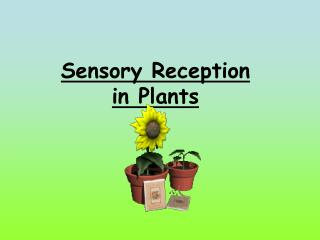 Sensory Reception in Plants