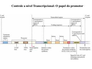 Estrutura  de um gene