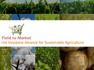 The  Keystone Alliance for Sustainable Agriculture