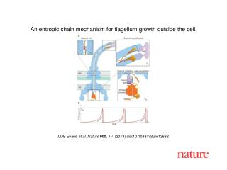 LDB Evans et al.  Nature  000 ,  1 - 4  (201 3 ) doi:10.1038/nature 12682