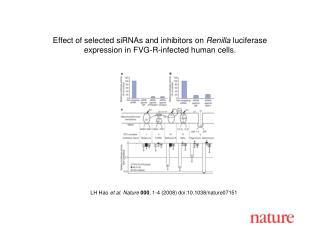 LH Hao  et al. Nature  000 ,  1 - 4  (2008) doi:10.1038/nature07151