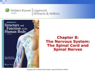 Chapter 8: The Nervous System: The Spinal Cord and Spinal Nerves