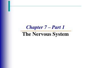 Chapter 7 – Part 1 The Nervous System