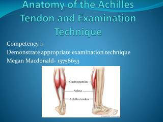 Anatomy of the Achilles Tendon and Examination Technique