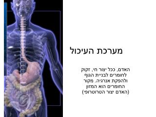 מערכת העיכול