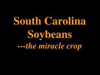 South Carolina Soybeans ---the miracle crop