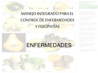 MANEJO INTEGRADO PARA EL CONTROL DE ENFERMEDADES Y FISIOPAT�AS