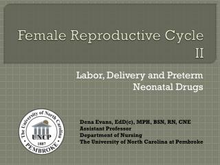 Female Reproductive Cycle II