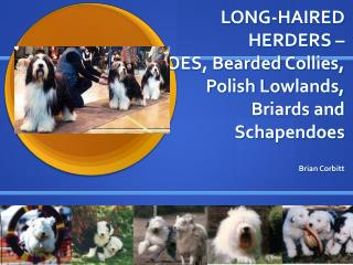 LONG-HAIRED HERDERS –  OES, Bearded Collies, Polish Lowlands, Briards and Schapendoes