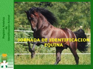 JORNADA DE IDENTIFICACION EQUINA